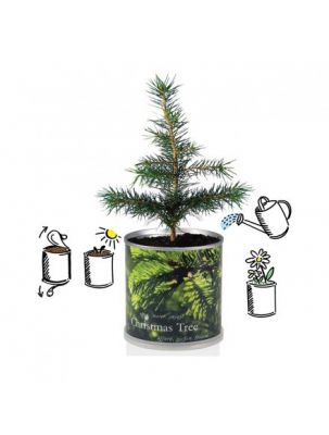 Weihnachtsbaum aus der Dose mit Tannenmotiv Zweig, 120g Inhalt